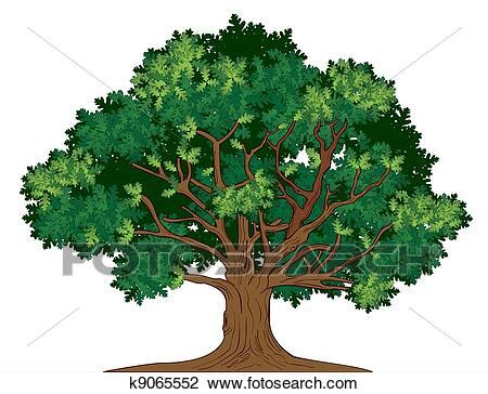 Vector oak tree Clipart | k9065552 | Fotosearch