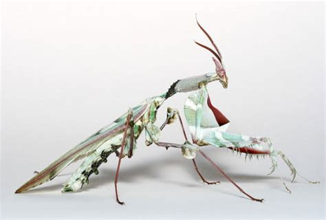 photography animals Cool bugs insects top ten
