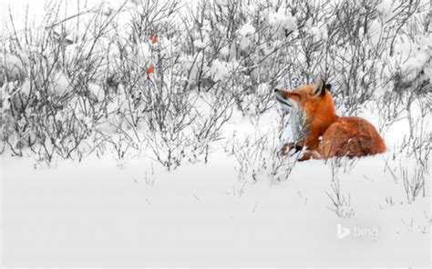 Download Full Set of Bing Wallpapers February (01 - 28), 2014