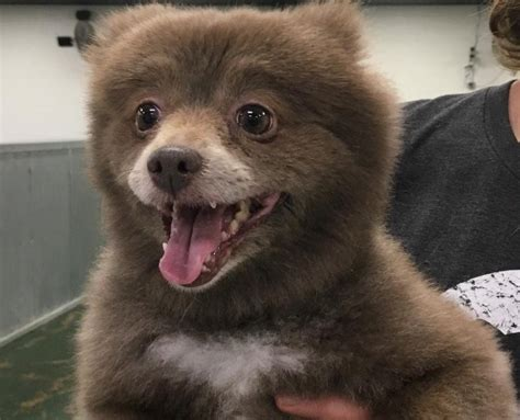Is This A Dog Or Bear Cub? - LiveOutdoors