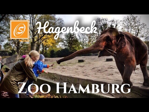 Hamburg Zoo (Germany): Top Tips Before You Go (with Photos