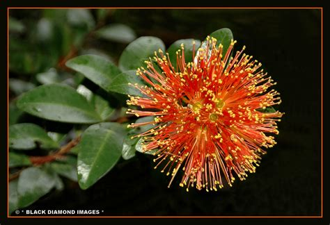 New Zealand Rainforest and Native Plants | Flickr