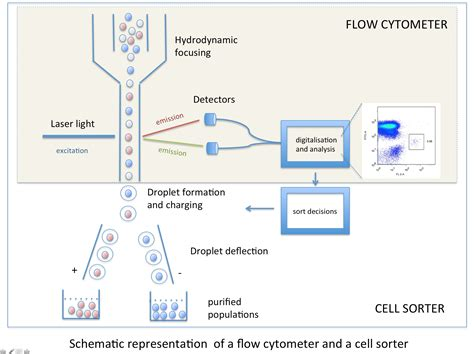 Flow Cytometry – Flow Cytometry Core Facility   ETH Zurich