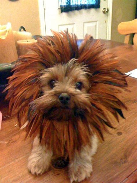 10 Costumes That Prove Yorkshire Terriers Always Win At