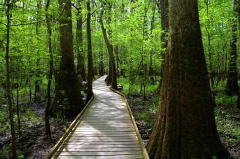 Congaree National Park - Destination Parks