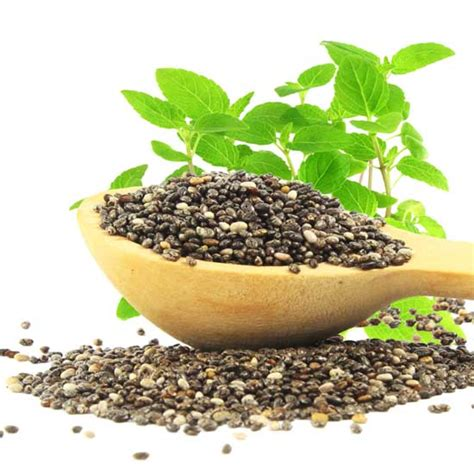 Herb to Know: What is Chia Seed? - Grow - Herb Companion